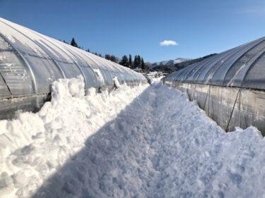 ハウスの雪がやばい